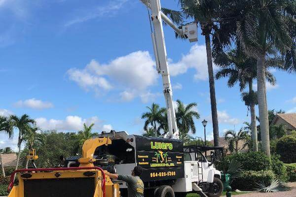 Luigi's South Florida Tree and Palm Pruning and Removal